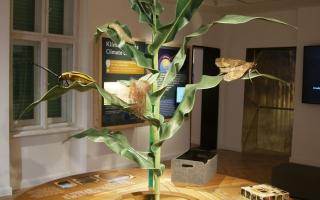 Agroverzum Tudományos Élményközpont - Kiterjesztett valóság